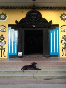 lumbini doggy friend
